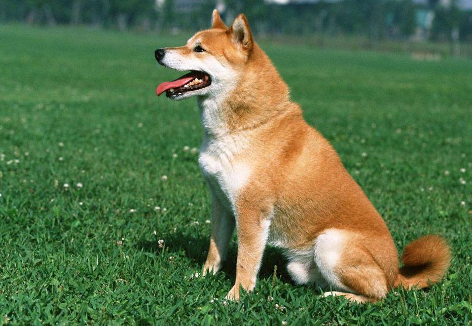 综狗人体艺术_500元以下的宠物狗?