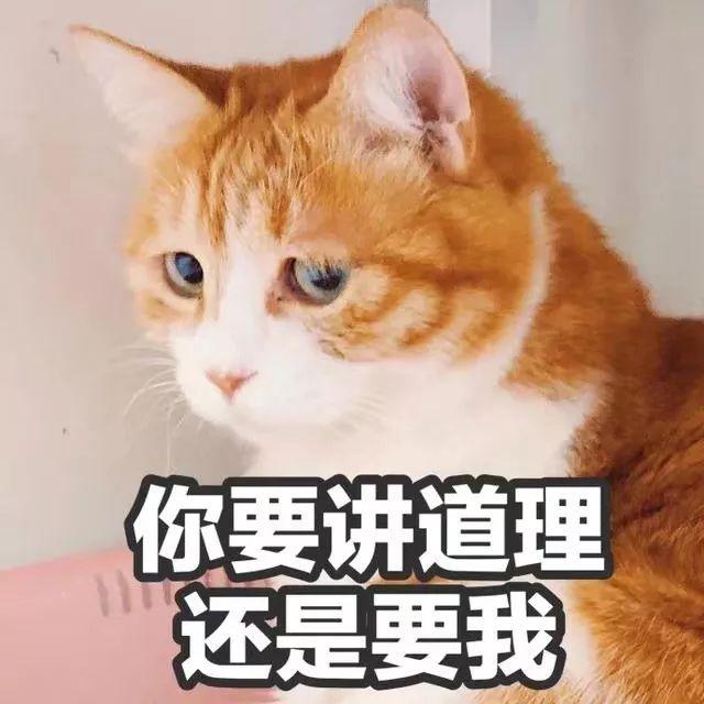 壁纸 动物 狗 狗狗 猫 猫咪 小猫 桌面 640_640