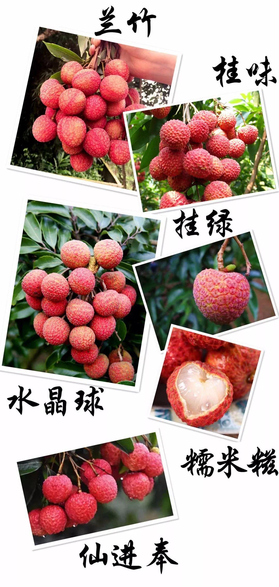 爆炸新闻:增城荔枝节!疯了,这个果场竟然价值55万一颗的挂绿免费送!