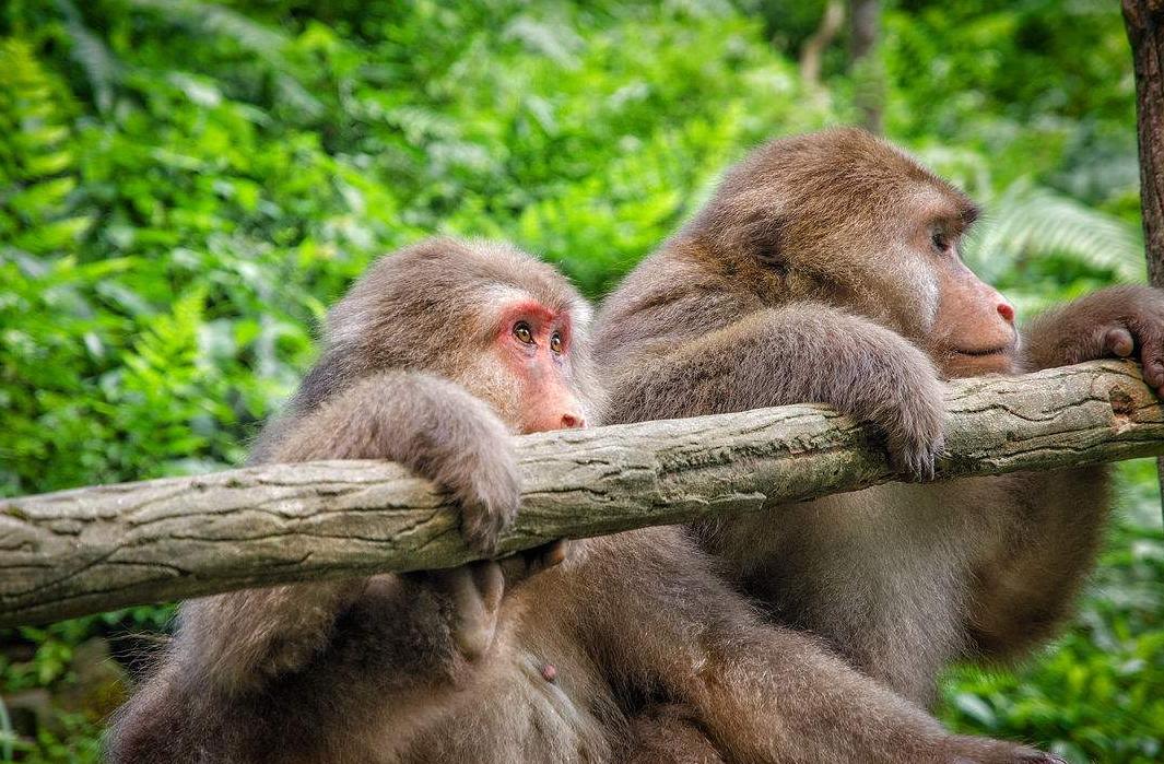 峨眉山的猴子真色,看见漂亮的姑娘就要上去耍流氓!