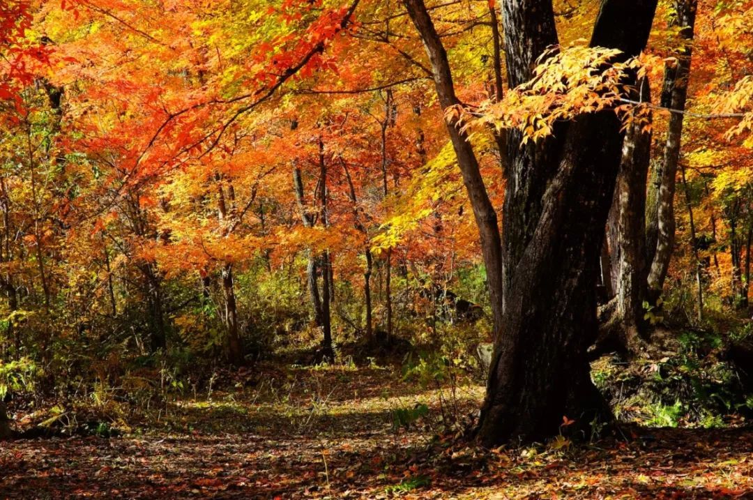 长白山西麓藏了个风景秀丽的城市,夏可避暑秋可赏色