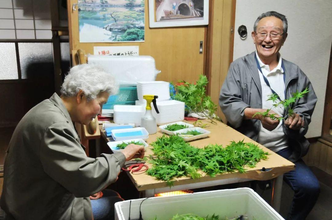 """日本最""""变态""""小镇,70%以上是65岁老人,却靠卖树叶创造图片"""