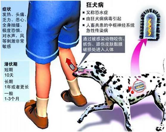 被猫狗抓伤,一定要打狂犬病疫苗吗?