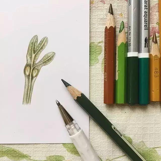 烟花手绘 片彩铅