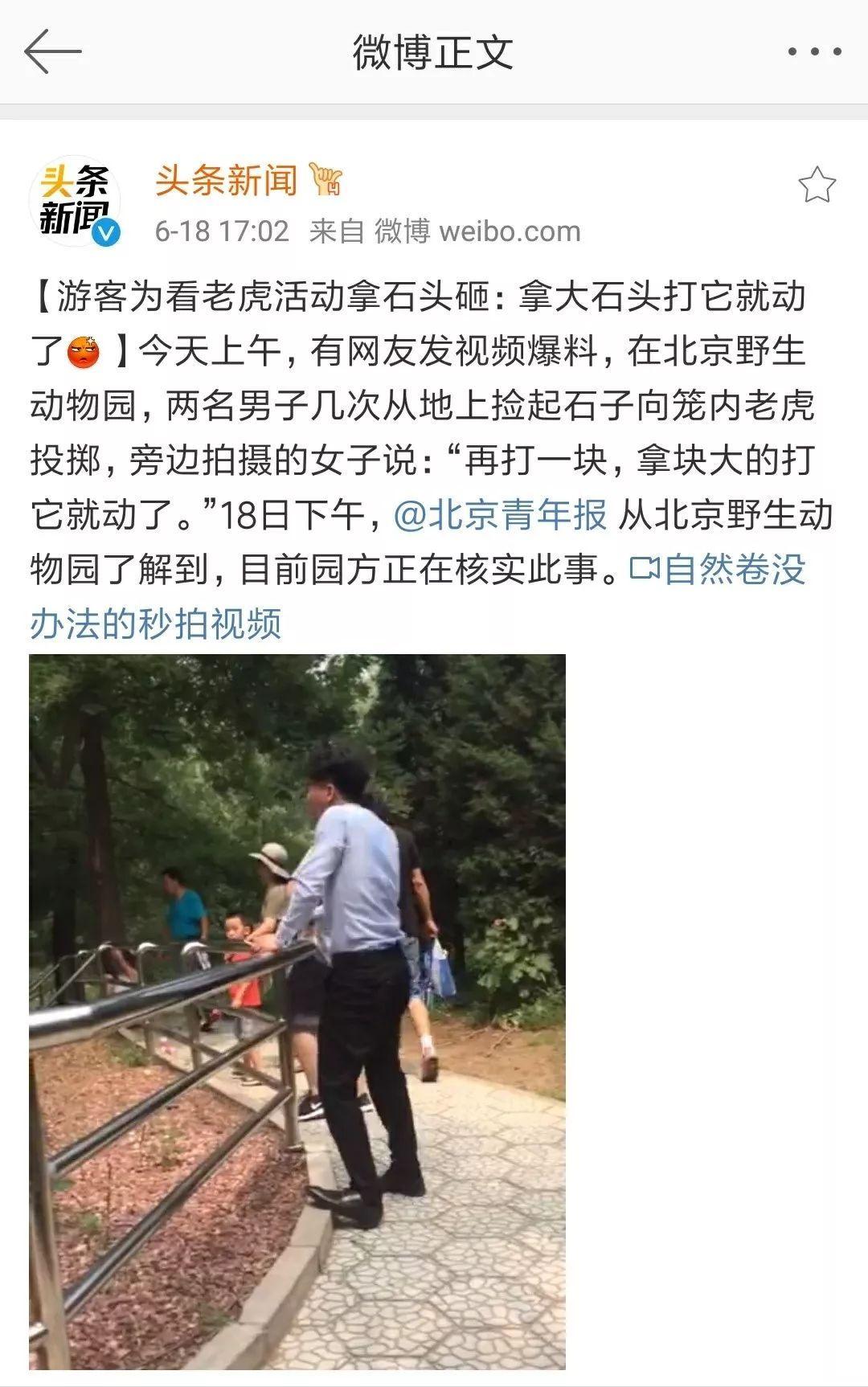 """【愤怒】游客在野生动物园用石子扔虎,还喊""""捡大的打"""""""