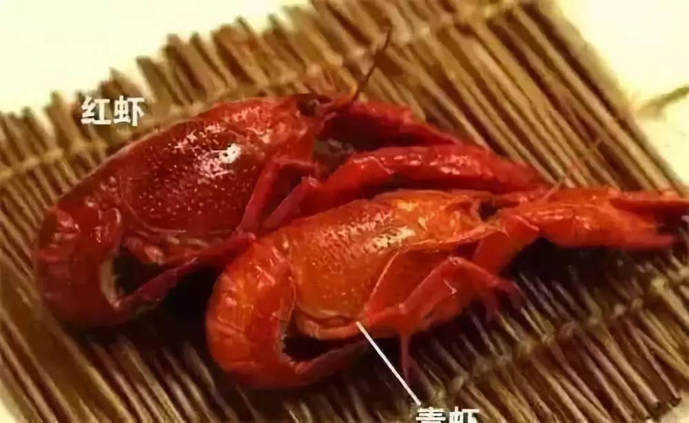 最火的小龙虾_马桥这家餐厅,把地道山城风味纸包鱼 牛蛙 泥鳅...做绝了