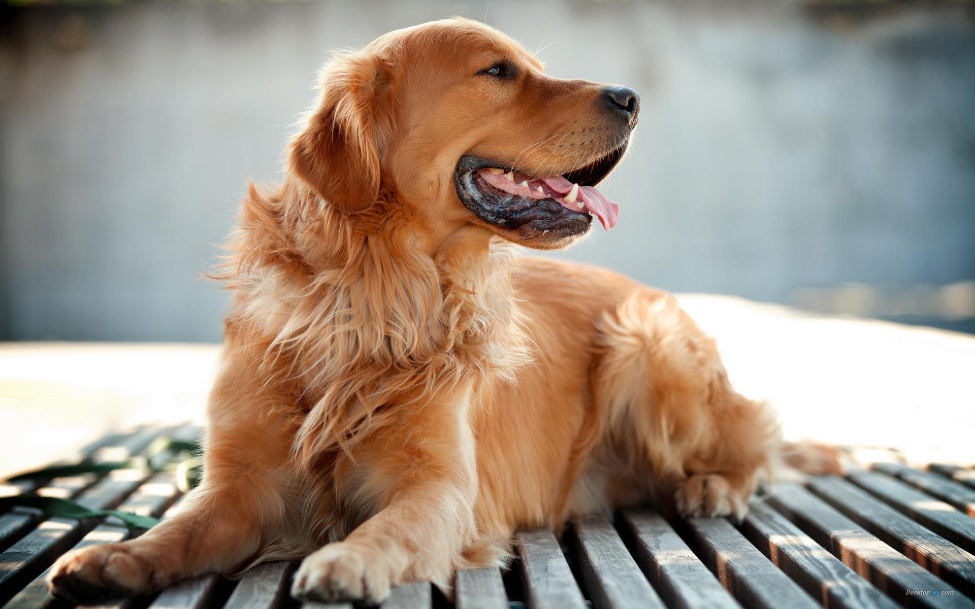 世界三大绝不咬人的狗 什么狗最干净最好养