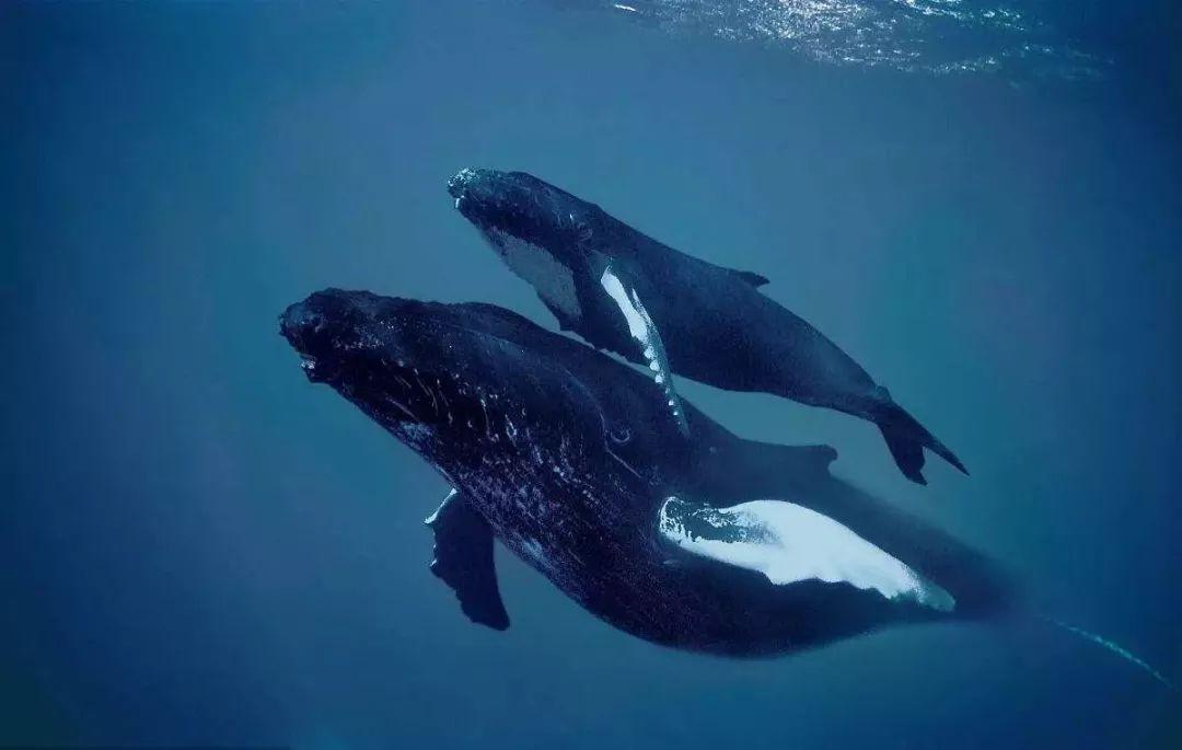 世界十大观鲸地,去世界尽头看鲸!