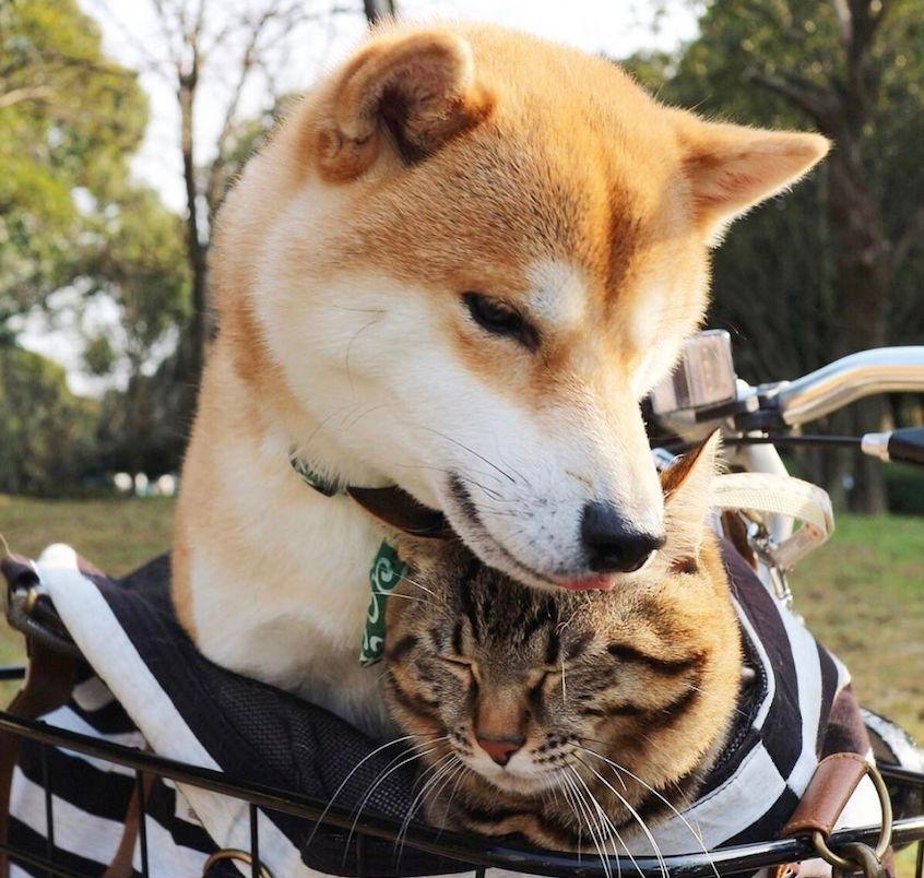 亚洲小色狗在线播放_和小奶狗谈恋爱,鬼知道我经历了什么!