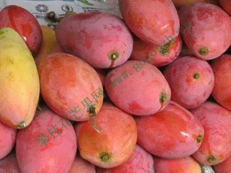 攀枝花芒果网:攀枝花的芒果为什么是全球最好吃的芒果?