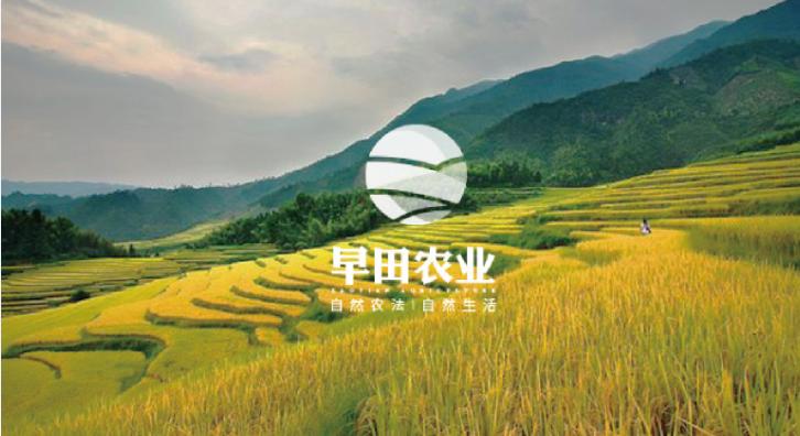 为早田小鱼儿玄机2站设计企业logo