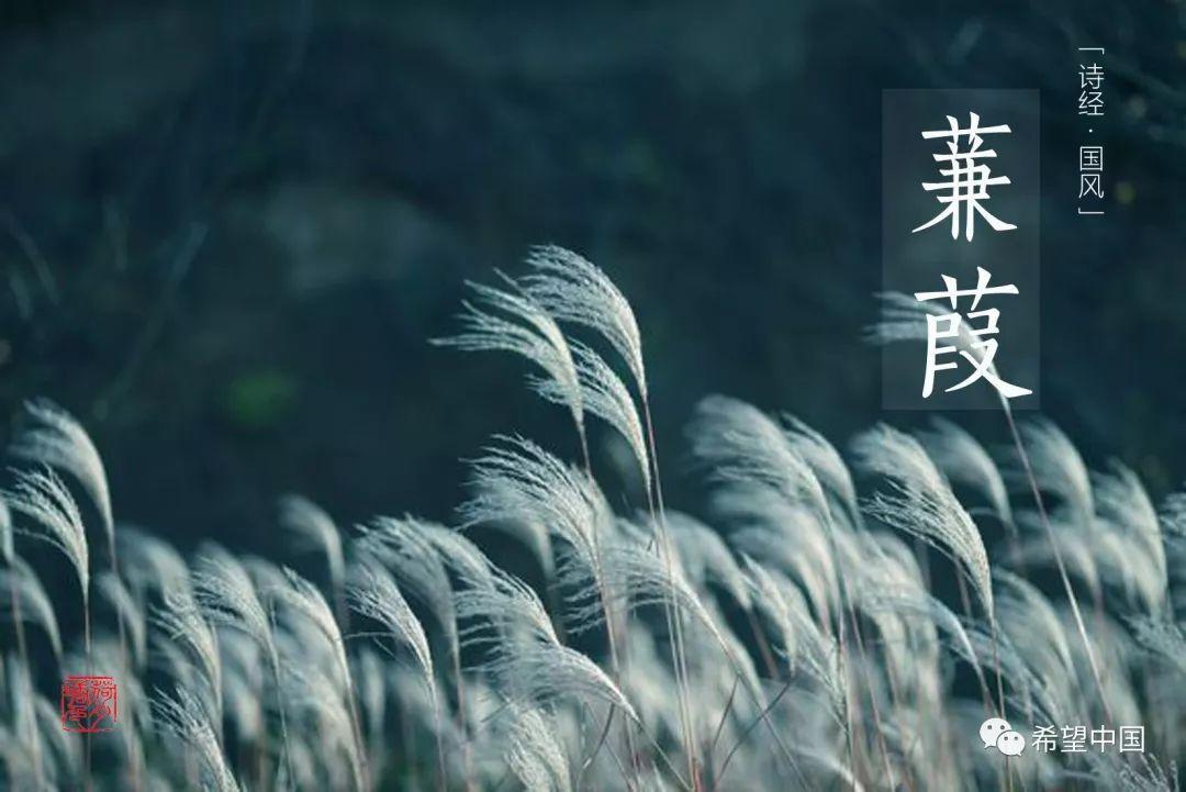 朗诵《蒹葭》 | 上海电视台-娱乐频道-《希望小主播