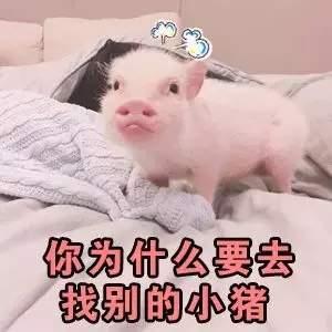 你是不是有别的狗了_你是不是在外面有别的小猪了表情包