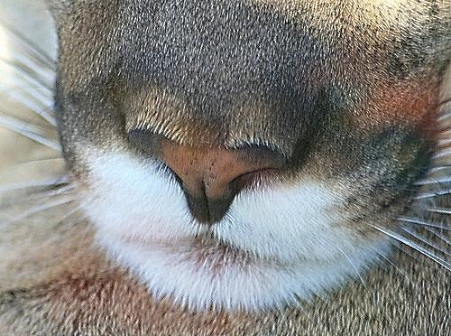 猜图几种动物_只看鼻子,你能认出这5张图都是哪种猫科动物吗?第4个最难猜