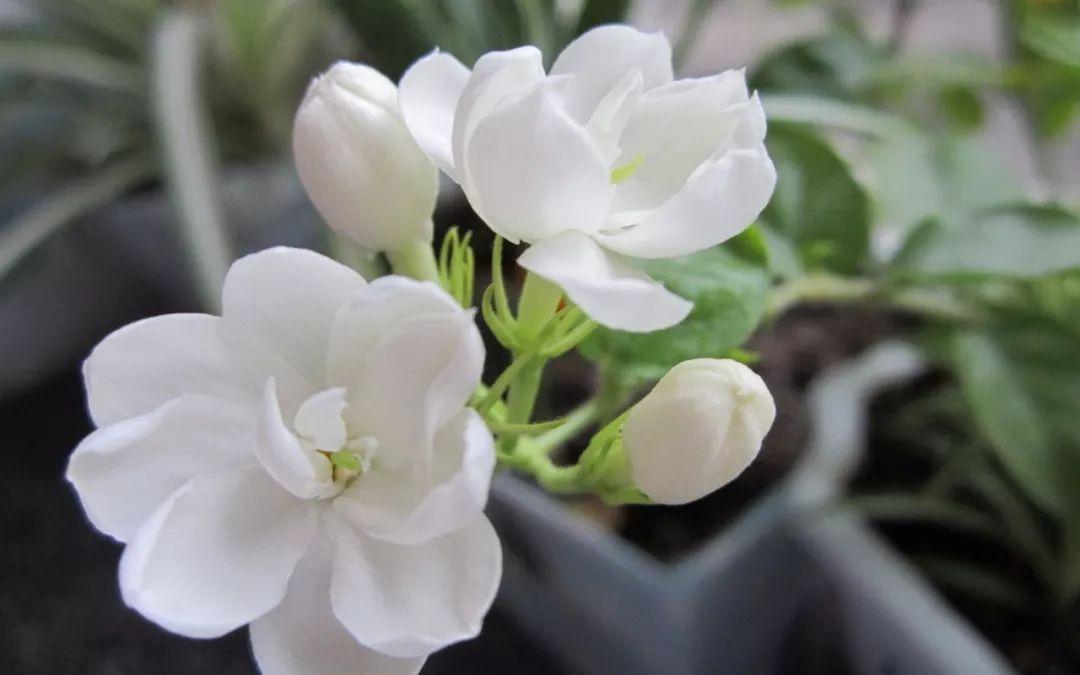 古筝《茉莉花》好一朵茉莉花,芬芳美丽人人夸