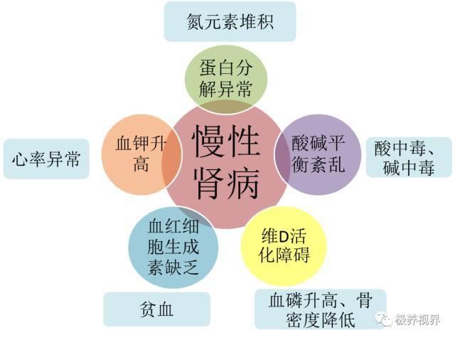 【极养视界】慢性肾病9+1营养防治策略