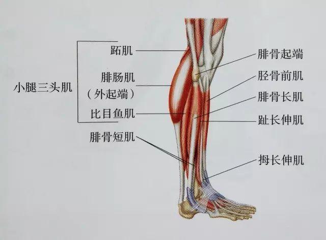 小腿肌肉如何拉伸