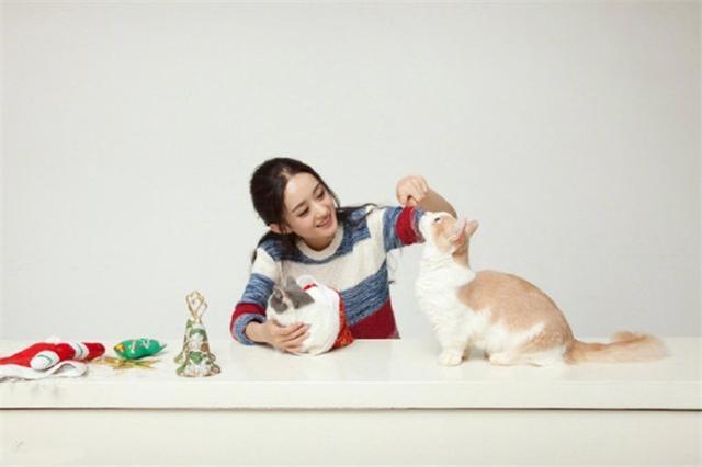 赵丽颖与喵星人同框拍写真 其实这几位才是真正的爱猫人士