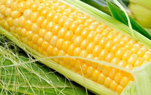 求撸丝片种子_果实 蔬菜 植物 种子 640_402