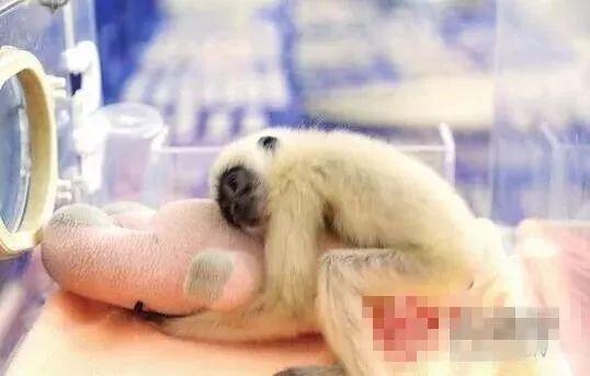 """云南:男子发抖音卖猴子,还做起野生动物非法贸易""""微商""""!"""