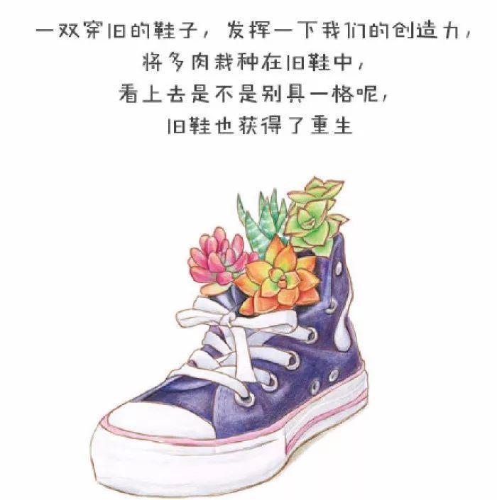 彩铅手绘花束乐飞鸟