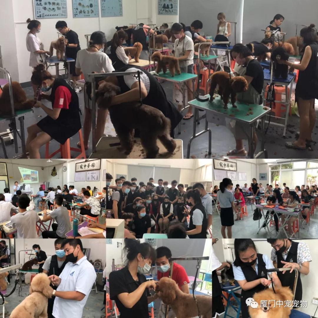 北京雨果宠物美容培训学校-百科