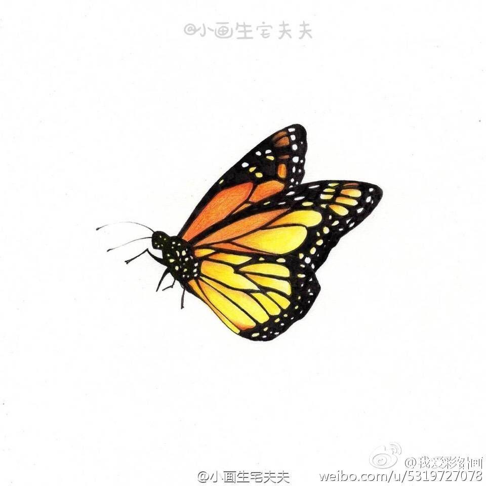 蝴蝶的性别决定为ZW型.有一种极为罕见的阴阳蝶.即一半雄性... -