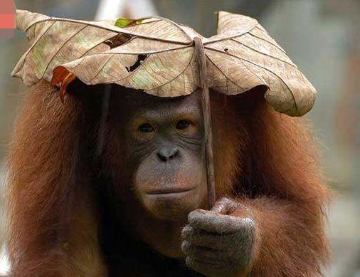 下雨天 小动物躲雨,很萌很可耐