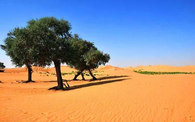 腾格里沙漠穿越,越野车带你感受人生起伏
