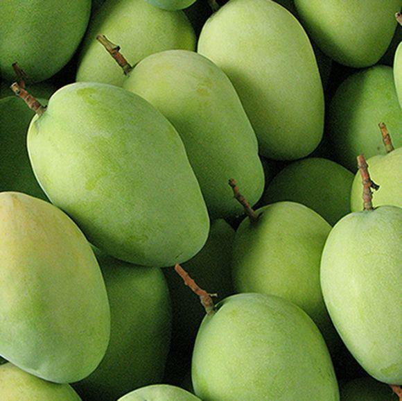 攀枝花芒果网:芒果种植条件是什么?攀枝花芒果种植五要素