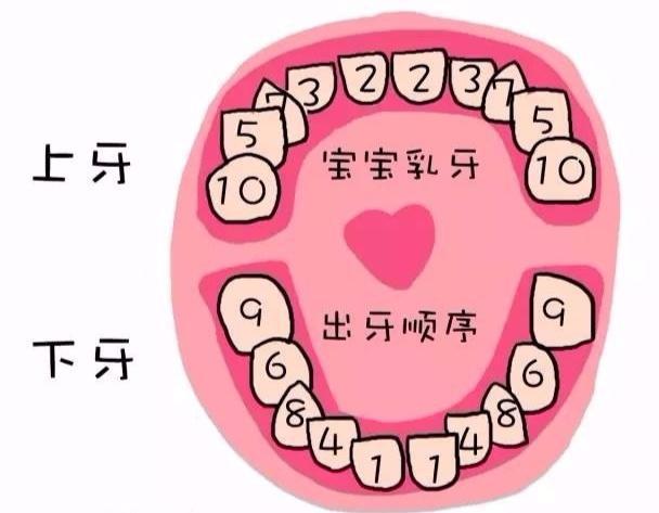 宝宝出牙顺序表 1,下正中门牙齿 6-10个月 2,上正中门牙齿 8-12个月 3