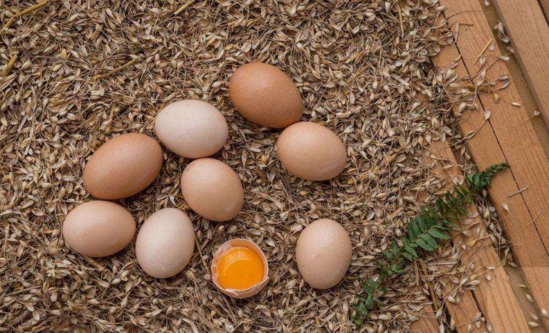 【科普营养】食用长斑鸡蛋会引起食物中毒?