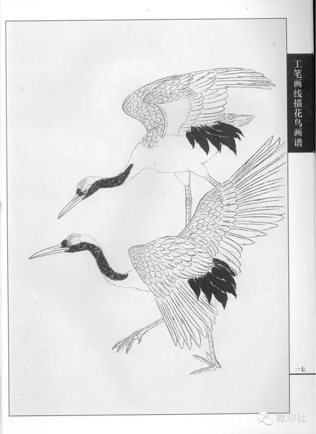 工笔画线描花鸟画谱 仙鹤篇