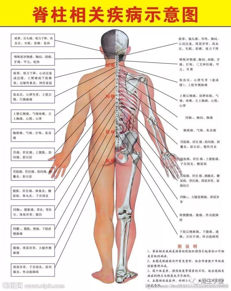 脊柱和脊髓损伤的MRI诊断