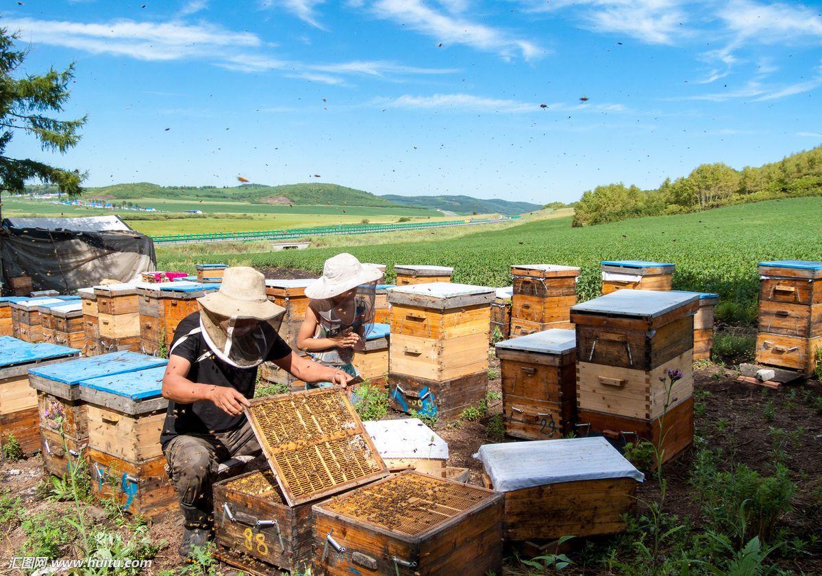 夏季养蜜蜂如何才可以养出强群