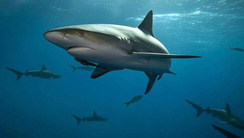 在海缸里孵化鲨鱼是怎样的体验?