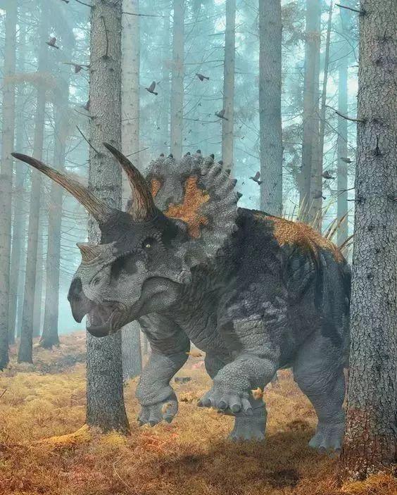 和暴龙生活在一个时期,同一个地方,三角龙是最晚出现的植食恐龙之一,经常被作为晚白垩纪的代表化石.