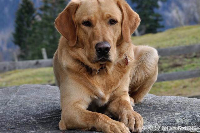 狗价格排名_世界十大最听话的狗狗排名 什么狗最好养又听话