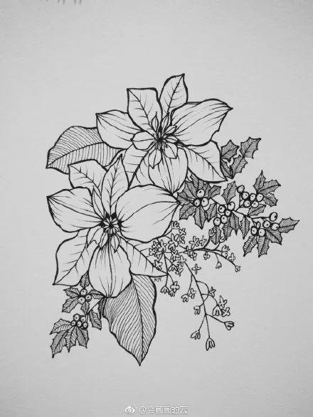 干货:教你画一幅线描植物图片