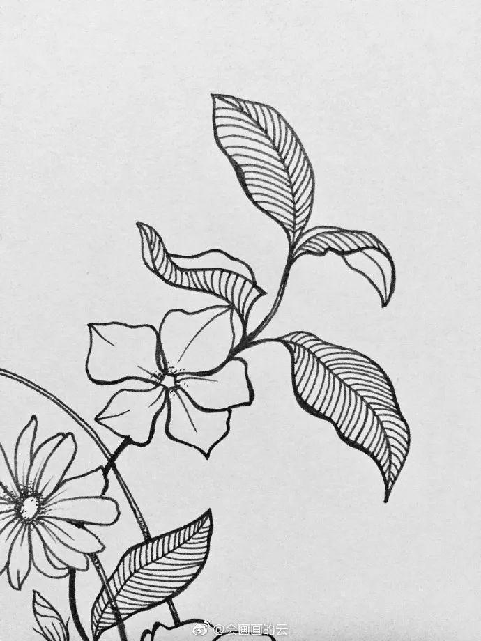 干货:教你画一幅线描植物