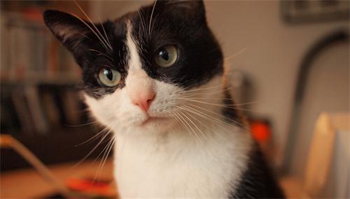⊙猫咪已经绝育半夜嚎叫,绝育猫半夜仍旧嚎叫,网站推广