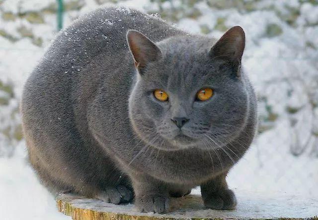 农庄里养只猫吧,全世界的猫都全了