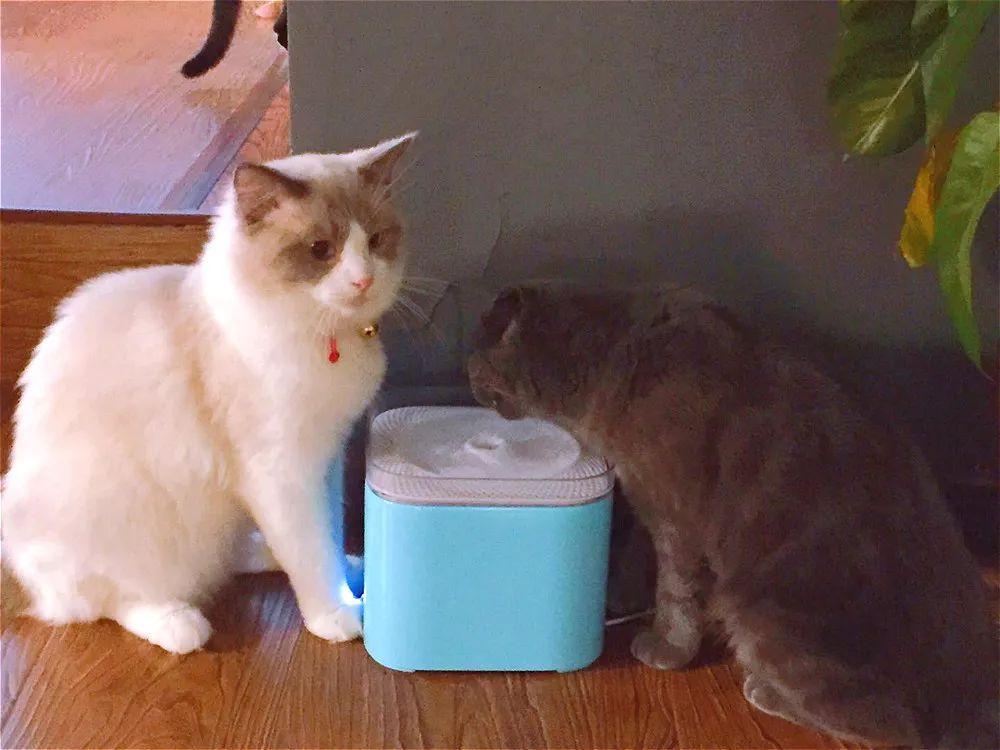 女的怎么撸_人气女主播在杭州开了一家撸猫咖啡