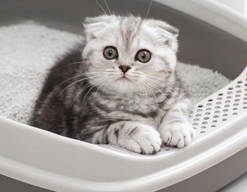 猫砂怎么用让猫咪更加喜欢舒适?_猫咪最近喜欢睡猫砂_猫咪喜欢扒猫砂