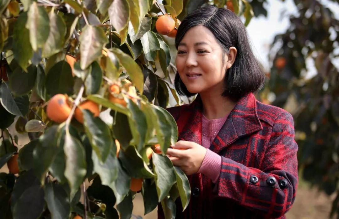 重磅 王茜华主演的电视剧《岁岁年年柿柿红》央视今晚9点将于一套抗战片猎啥子图片