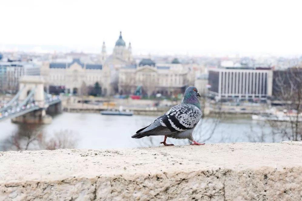 在多瑙河边做了个梦  捷克