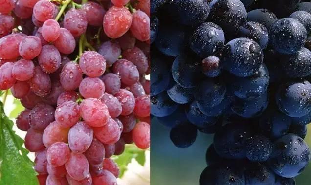 葡萄和提子有啥区别?葡萄上的白霜能不能吃?关于葡萄的5个真相