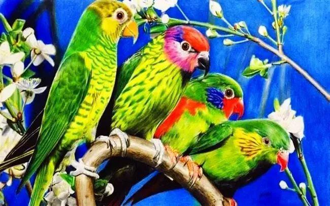 一组彩铅画出的鹦鹉,太漂亮啦!图片