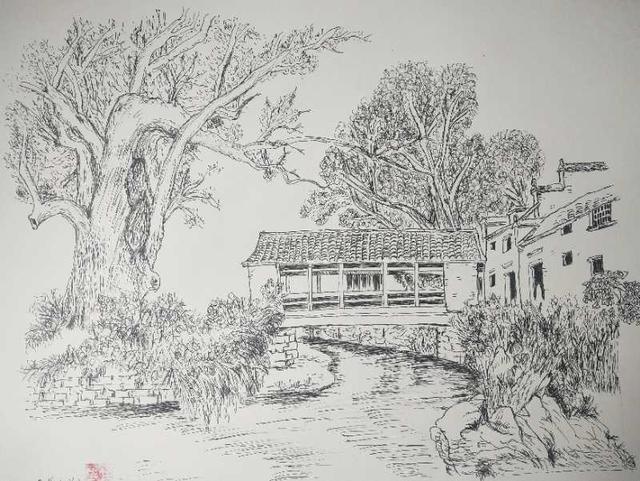 30,喜杨杨的钢笔画临摹