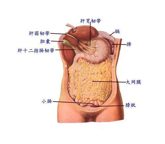 的慢性腹膜炎,多发于儿童和青少 肠系膜淋巴结结核、输卵管结核等